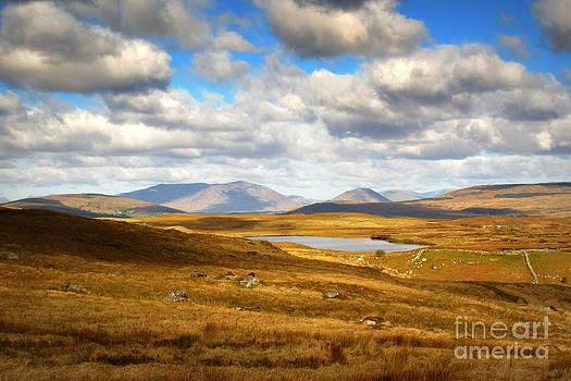 Golden landscapes  by Annie  Japaud