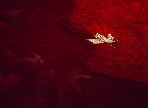 Golden Leaf on Crimson Ice by Joe  Connors