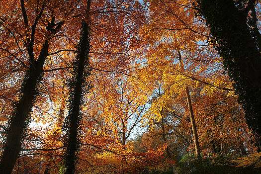 Golden leafs by Erik Tanghe