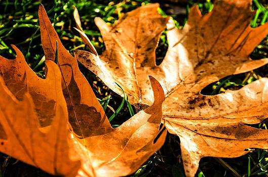 Golden leafs. by Slavica Koceva