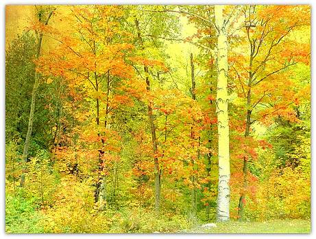 Golden Leaves  by Dianne  Lacourciere