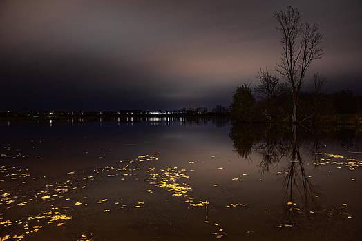 Dale Kauzlaric - Golden Leaves On Lake Wausau