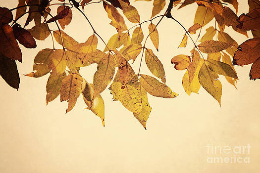 Golden Leaves by Pam  Holdsworth