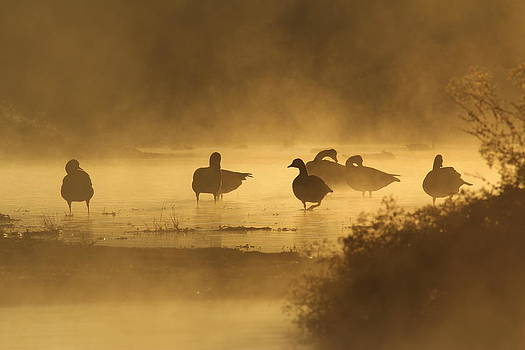Golden morning by David March
