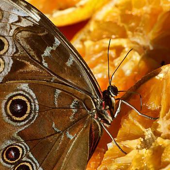 Nikolyn McDonald - Golden Nectar