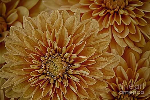 Golden Offering by Dee Johnson