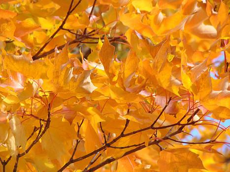 Baslee Troutman - Golden Orange Autumn Leaves art prints