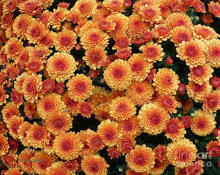 Dee Flouton - Golden Orange Mums