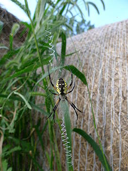 Richard Reeve - Golden Orb Spider