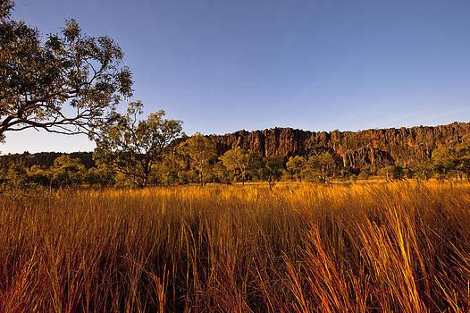 Golden Outback by Boyd Nesbitt