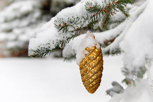 Golden Pinecone 2 by doug hagadorn by Doug Hagadorn