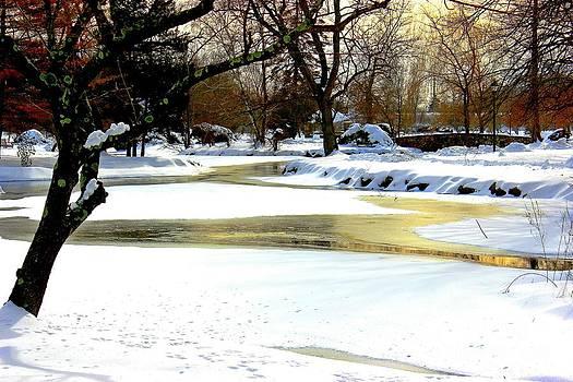 Golden Pond Reflections by Judy Palkimas