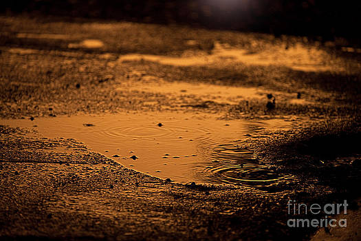 Cindy Singleton - Golden Raindrops at Dusk