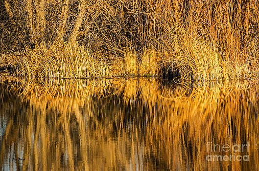 Golden Reflections by Sue Smith