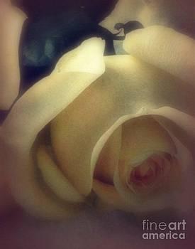 Diana Besser - Golden Rose