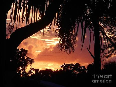 Golden Sky and Palm Silhouettes by Debb Starr