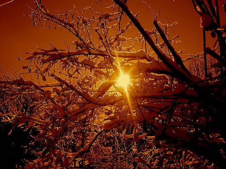 Golden Snowy Sun by Kurler Warner