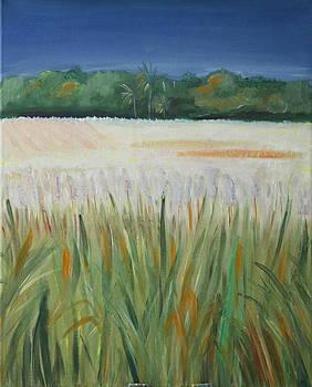Golden sugarcane field by Brigitte Roshay