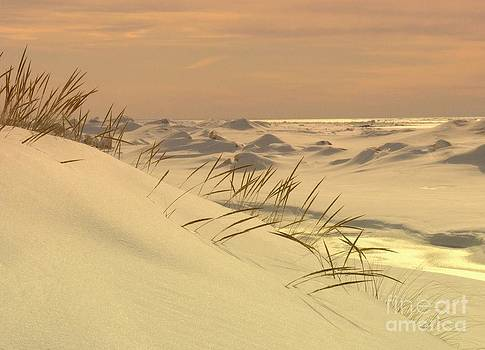 Golden Sunset Beachgrass Beauty Of Lake Michigan by Jack  Martin