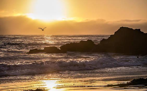 Golden Sunset by Ursula Klepper