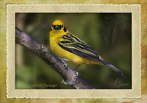 Golden Tanaget by Ecuador Images