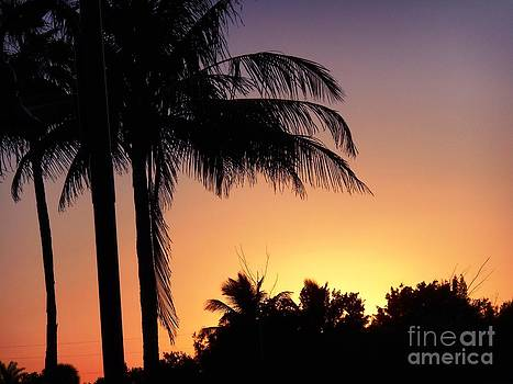 Golden Twilight with Palms at Dusk by Debb Starr
