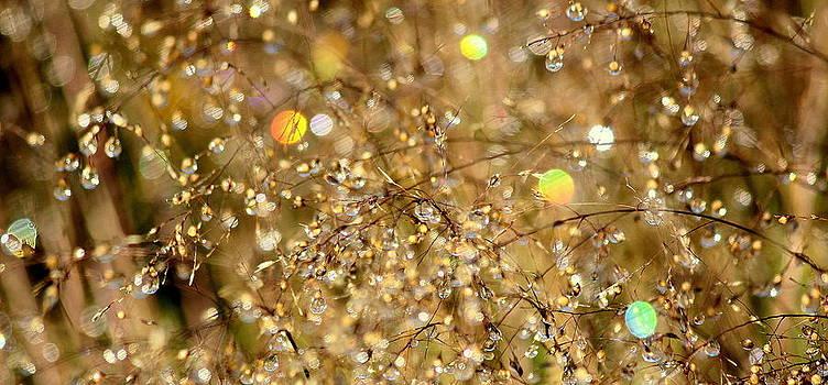 Rosanne Jordan - Golden Twinkles of Light
