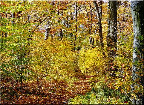 Golden Woods by Mikki Cucuzzo