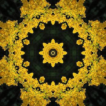 Valerie Kirkwood - Goldenrod Kaleidoscope