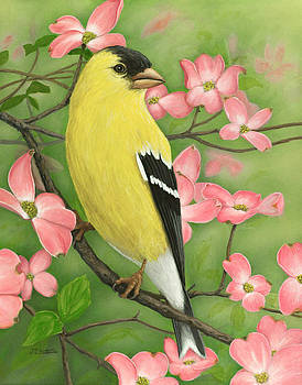 Jim Ziemer - Goldfinch and Dogwood