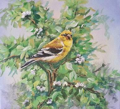 Goldfinch Female by Sandra Lett