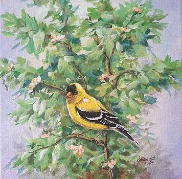 Goldfinch Male by Sandra Lett
