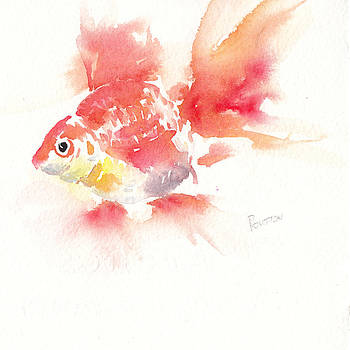 Goldfish by Rachel Dutton