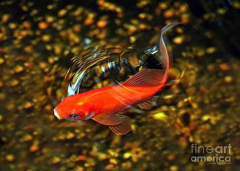 Susan Wiedmann - Goldfish Swimming