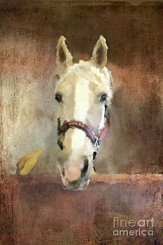 Goldie by Tamra Heathershaw-Hart