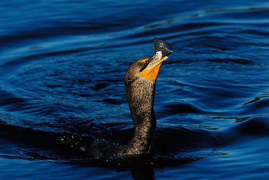 Gone Fishing by Stefan Carpenter