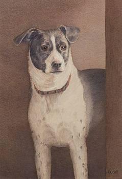 Good Boy Jack  by Kate ODell
