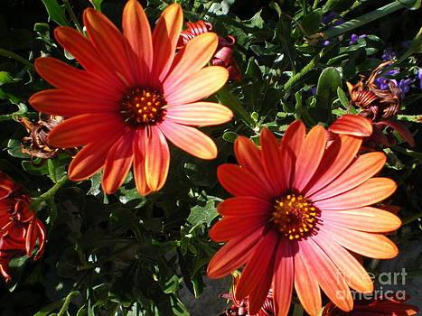 Good morning flower. by Ann Fellows