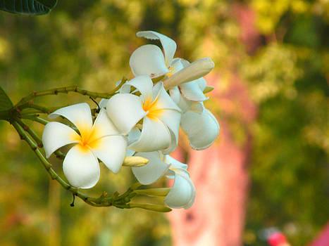 Good Morning Flowers by Paresh Bhanusali