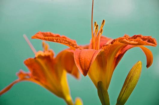 Good Morning Lily by Catherine Murton