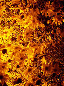 Goodnight Flowers by Guy Ricketts