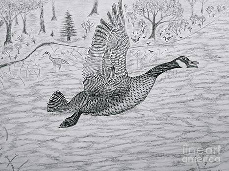 Goose in flight detail from Canadian Greetings by Gerald Strine