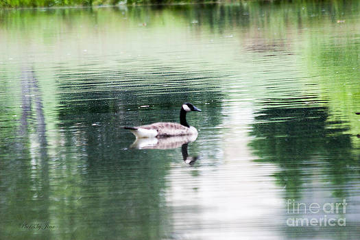 Goose on the Lake by Jinx Farmer