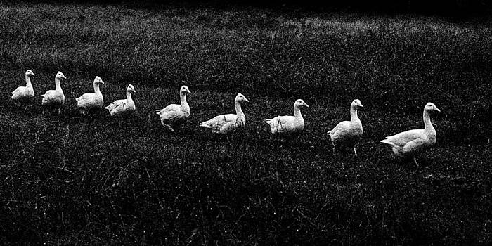 Goose Stepping by Geoff Payne