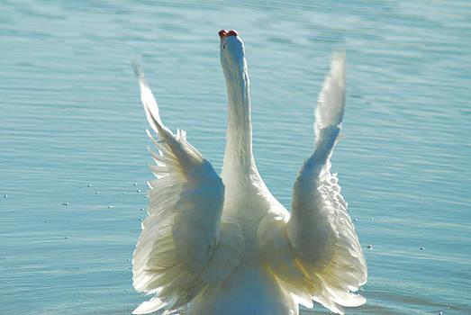 Tam Ryan - Goose Wings