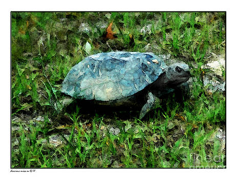 Gopher Tortoise by Margie Middleton