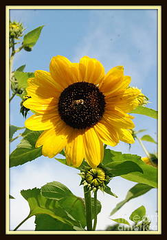 Gorgeous Garden Sunflower With Bee by Eunice Miller