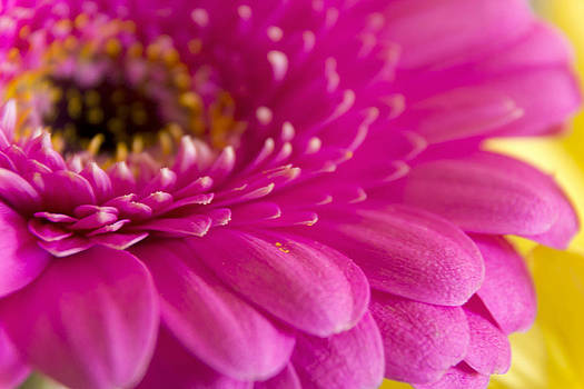 Gorgeous Pink Flower by Dana Moyer