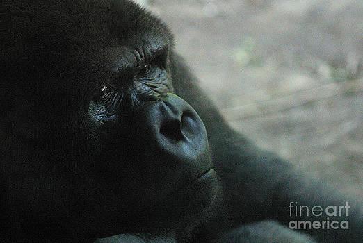 Gary Gingrich Galleries - Gorilla-3