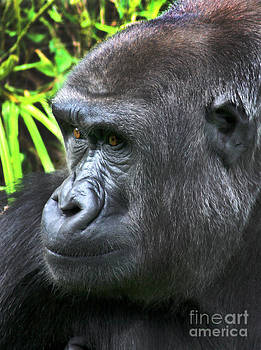 Gary Gingrich Galleries - Gorilla-9746